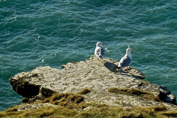 Two Gulls = Double Trouble!