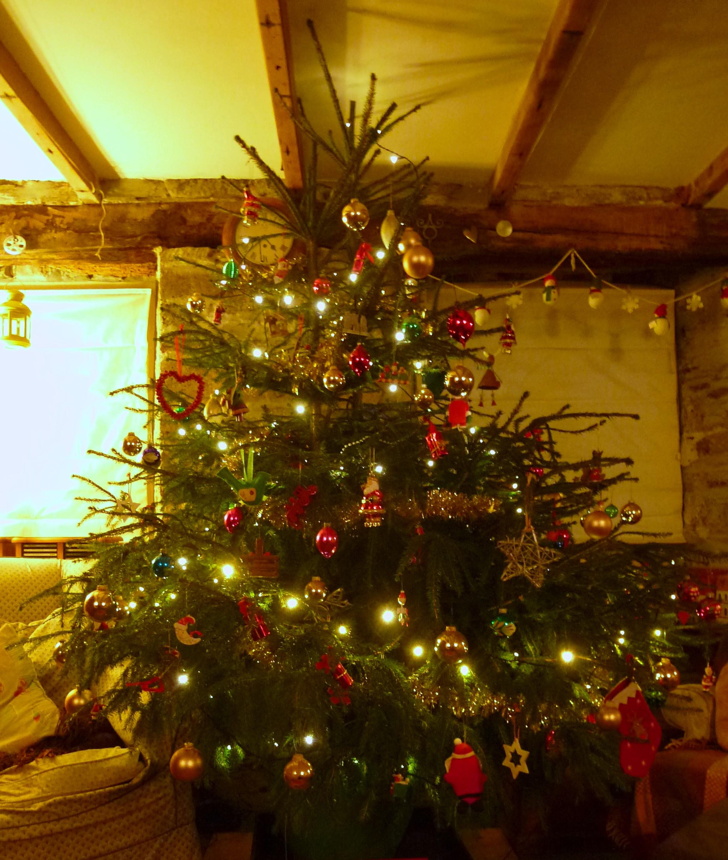 A real Christmas Tree.